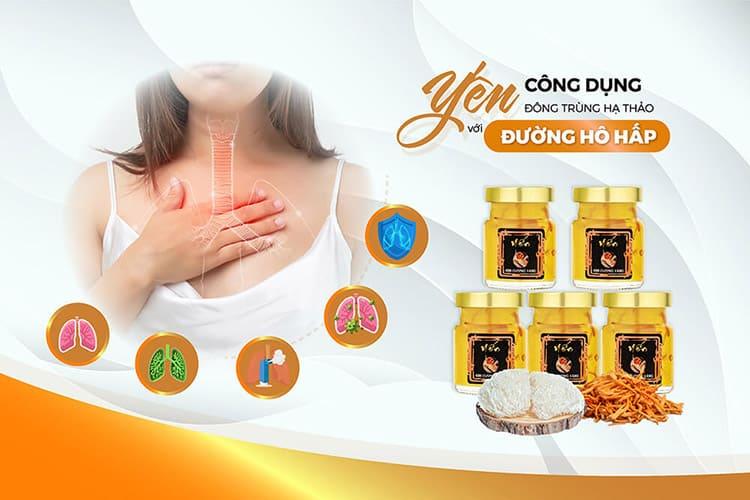 Tác dụng của yến đông trùng hạ thảo đối với hệ hô hấp
