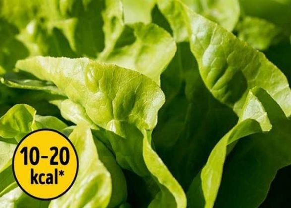 salad thức ăn không sợ tăng cân