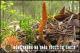 Tìm hiểu về đông trùng hạ thảo trong tự nhiên