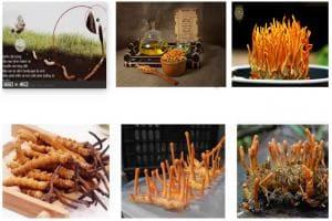 Các món ăn ngon ở nhà mùa dịch|Các món ăn ngon|Đông trùng hạ thảo
